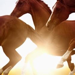 Pferderechtsabend