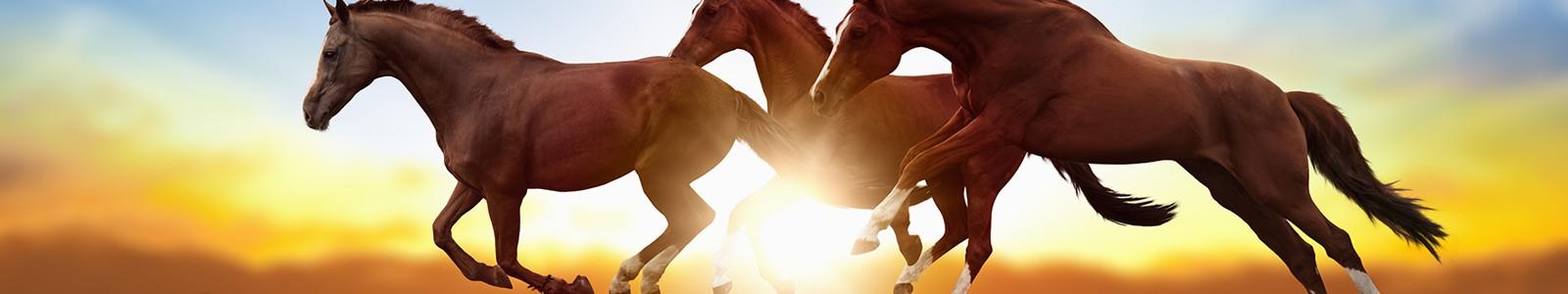 Banner Pferde